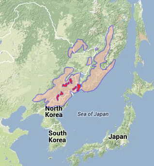 amur leopard panthera pardus orientalis endangered animals, electrical wiring, amur loepards world map location