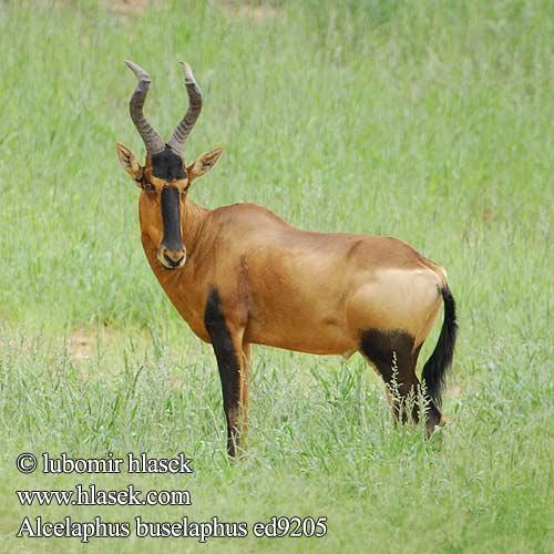 Extinct Species Endangered Animals Our Friend